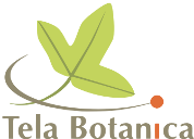 Logo de Tela Botanica
